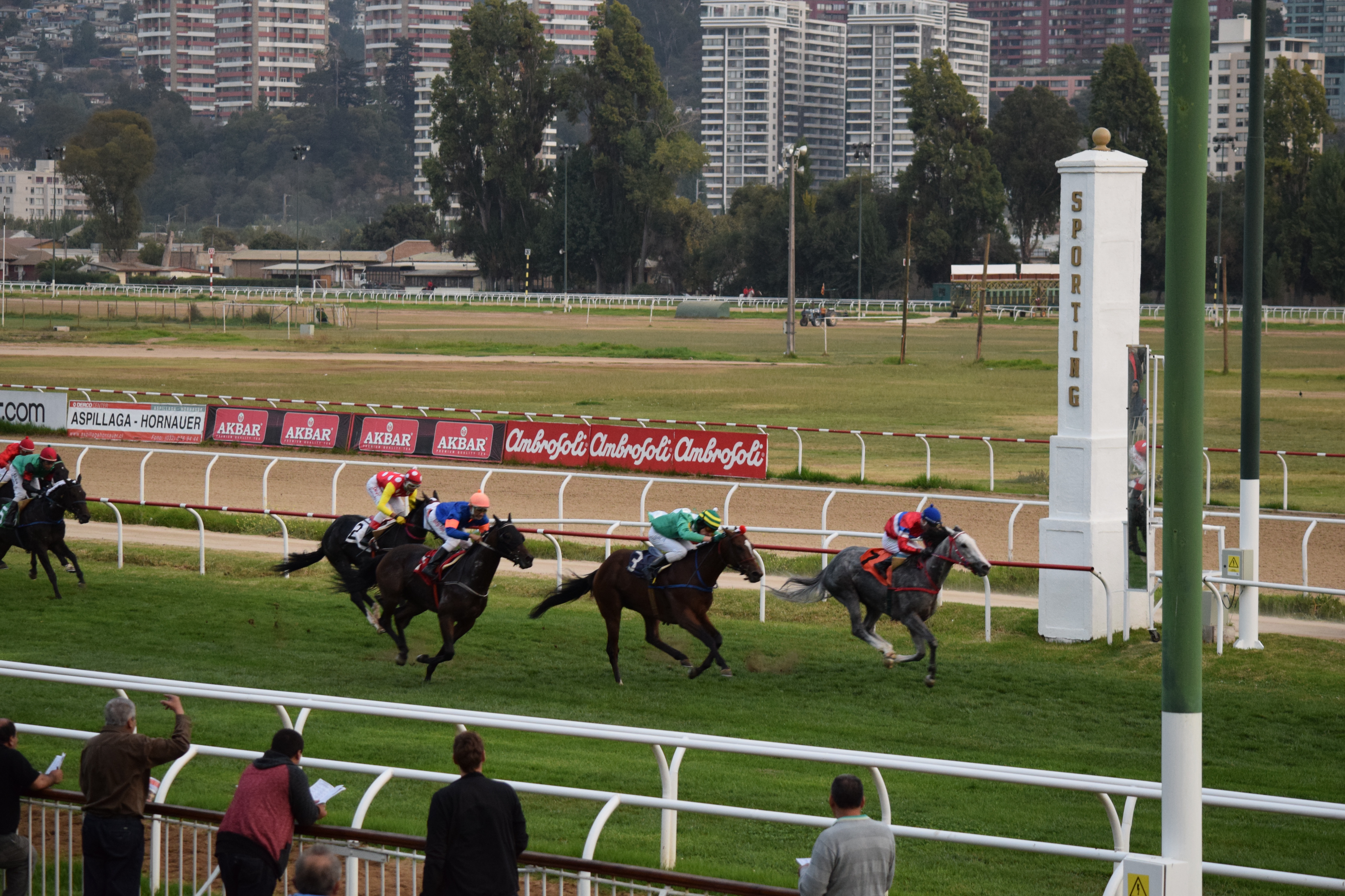 Racehorses Cross The Finish Line At Valparaiso Sporting Racetrack In Chile Prominent Horse Racing