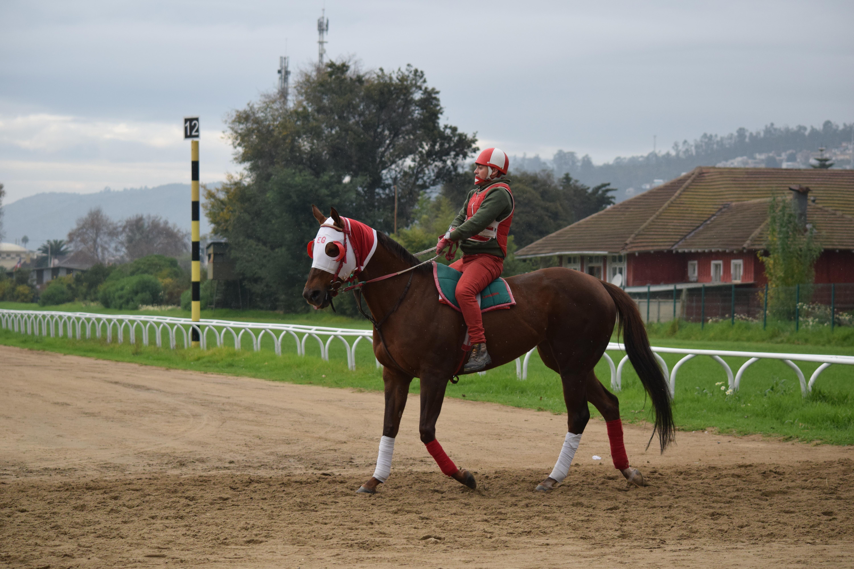 Horse In Latin Horse Racing in Latin ...